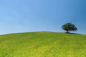 green grass turf and a tree